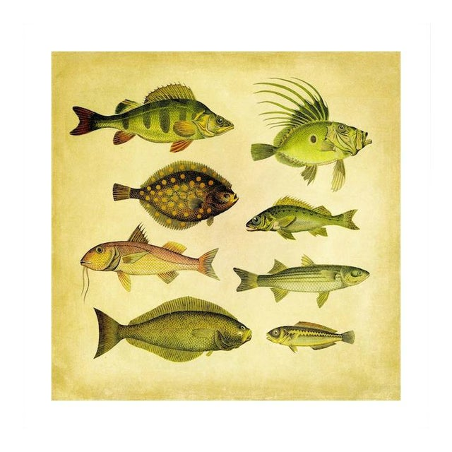 Vintage '8 Green Fish' Archival Print For Sale
