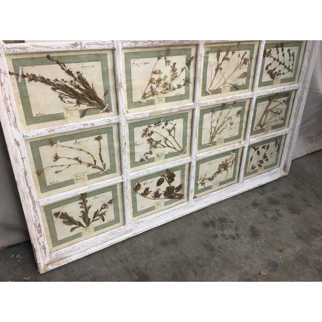 White Vintage Italian Framed Botanical Herbarium Wall Hanging For Sale - Image 8 of 12