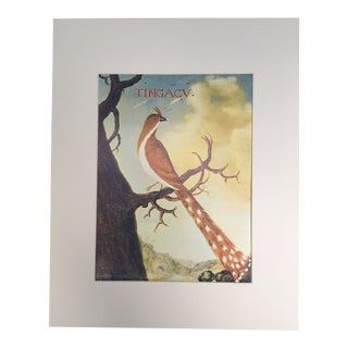 "Albert Eckhout's Squirrel Cuckoo - 1970s Print of 1644 Painting From ""Birds of Brazil"" For Sale"