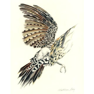 Kathleen Ney Northern Flicker 1 Original Drawing For Sale