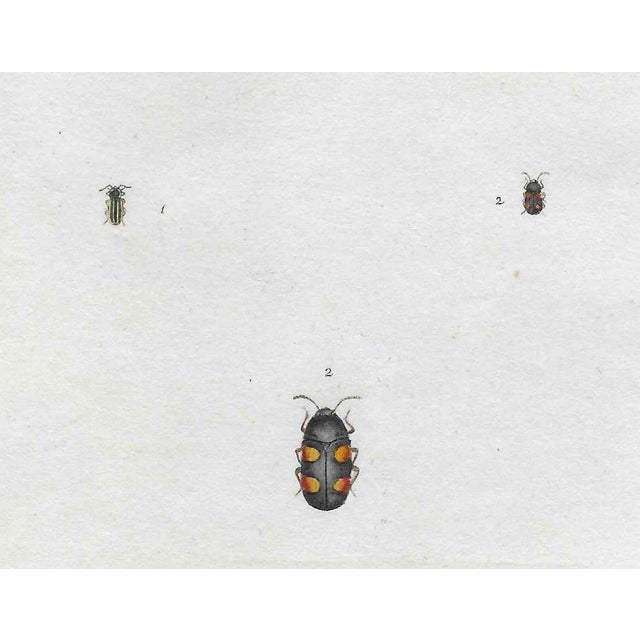 English Traditional Antique English Insect Engraving For Sale - Image 3 of 4