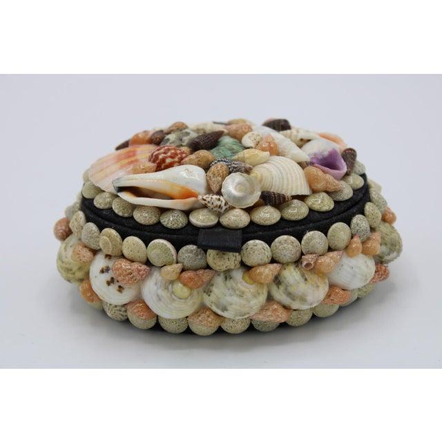Mid 20th Century Vintage Organic Seashell Jewelry Treasure Box For Sale - Image 9 of 12