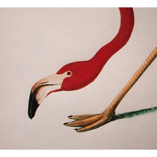 John James Audubon American Flamingo by John James Audubon, Large Reproduction Print For Sale - Image 4 of 9