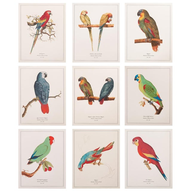 1590s Anselmus Boëtius De Boodt, Parrot Print Set of 9 For Sale