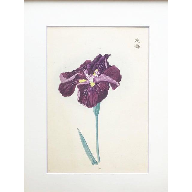 Asian Japanese Iris Woodblock Botanical Print C.1900 For Sale - Image 3 of 9