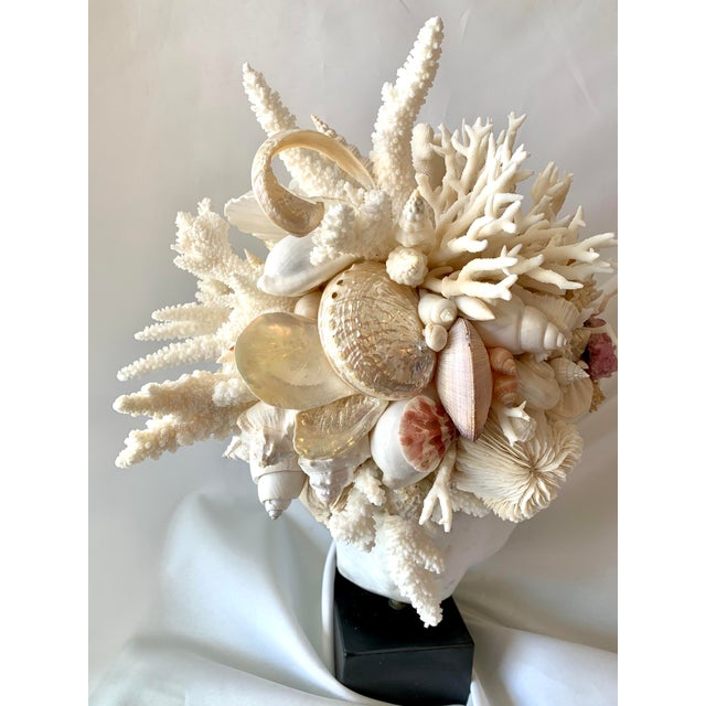 Figurative Hygiea Shell Head Sculpture For Sale - Image 3 of 8