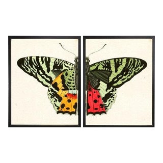 "Split Red and Green Butterfly - 46"" X 29"" For Sale"
