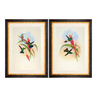 1990s John Gould Framed Prints, Hummingbird (Plates 78 & 90) - a Pair For Sale