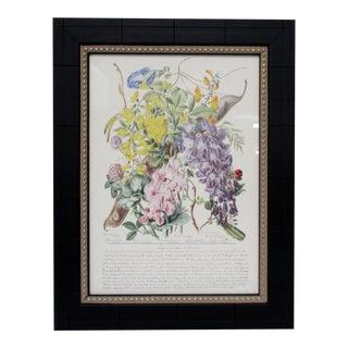 Botanical Print, Leguminosae For Sale