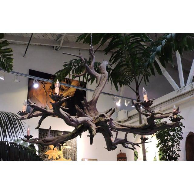 Bronze Driftwood Manzanita Chandelier - Image 5 of 6