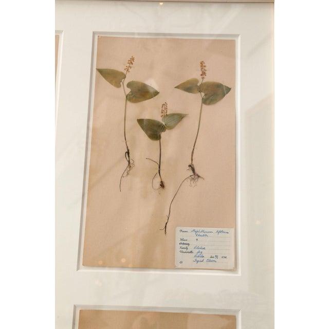 Folk Art Framed Set of Four Herbaria For Sale - Image 3 of 13