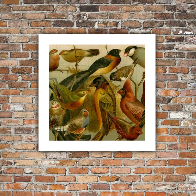 Antique 'Red Birds' Archival Print - Image 3 of 4