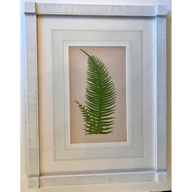 Mid 19th Century 19th Century French Fern Lithograph For Sale - Image 5 of 5