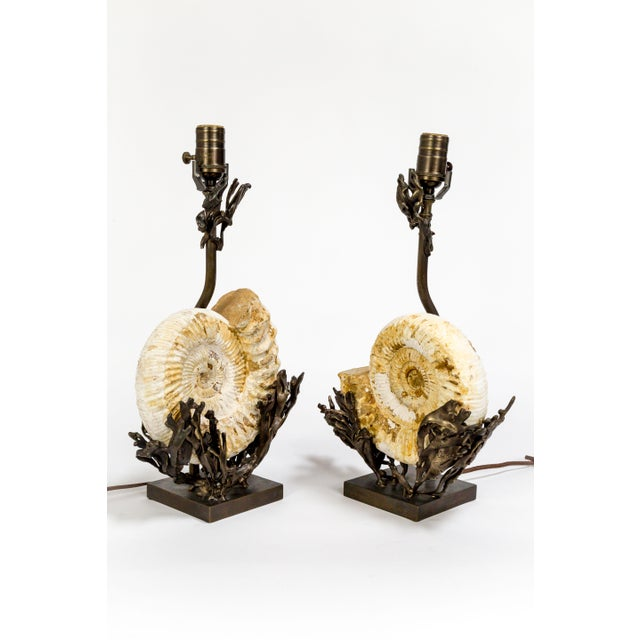 Fossilized Nautilus & Bronze Laurasia Table Lamp by Tuell + Reynolds (2 Available) For Sale In San Francisco - Image 6 of 13