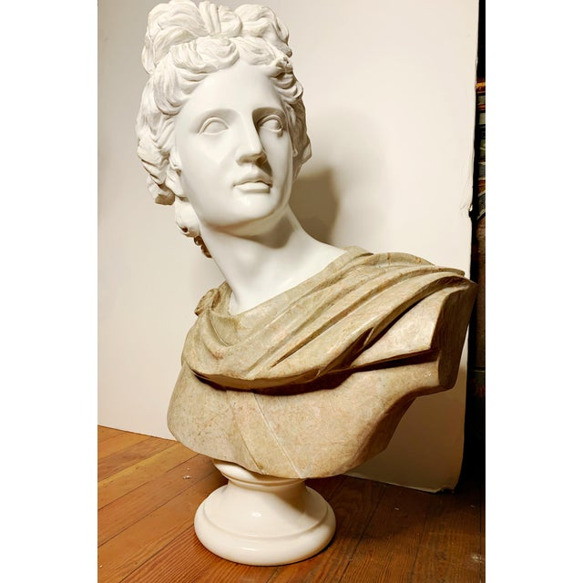 Italian Marble Bust of Appollo Belvedere For Sale - Image 4 of 12