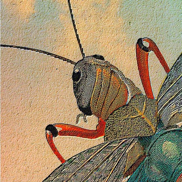 Antique 'Flying Grasshopper' Archival Print - Image 4 of 4