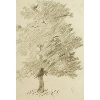 Pencil Study of Tree Drawing