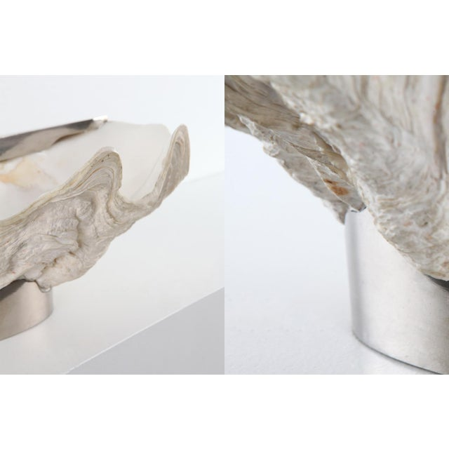 Silver Mounted Giant Clam Shell in the Style of Gabrielle Crespi - 1950s For Sale - Image 8 of 9