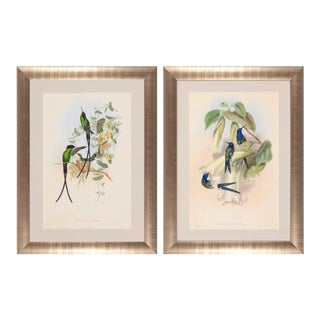 1990s John Gould Framed Prints, Hummingbird (Plates 98 & 42) - a Pair For Sale