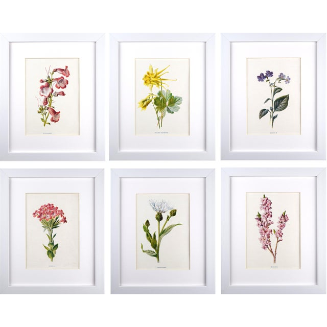 Antique English Botanical Prints by Hulme C.1900 - Set of 6 For Sale - Image 13 of 13