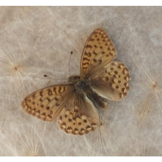 Arts & Crafts Antique Arts & Crafts Milkweed & Real Butterflies Serving Tray For Sale - Image 3 of 10