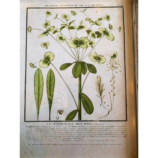 Green Vintage Framed French Botanical Prints Reproductions - Set of 4 For Sale - Image 8 of 13