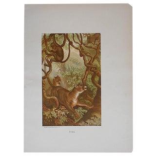 Antique Puma Lithograph Print For Sale