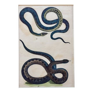 Framed 18th Century Hand Painted Snake For Sale