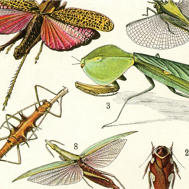 Vintage 'Bug City' Archival Print For Sale - Image 4 of 4