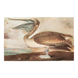 1960s Vintage Lithograph of Brown Pelican by John James Audubon For Sale