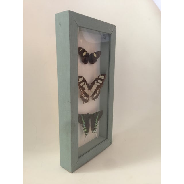 Butterfly Specimen in Shadowbox - Image 3 of 6