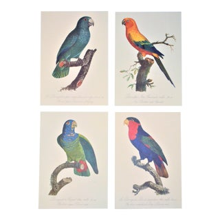 Early 20th Century Antique Lithograph Parrots by Jacques Barraband - Set of 4 For Sale