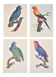 Image of Lithograph Prints