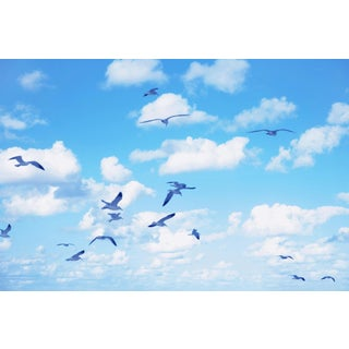 """Seagulls 2"" Landscape Photograph For Sale"