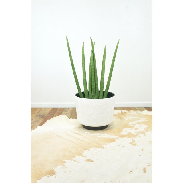 Vintage Mid-Century Modern Ceramic Planter. White with textured surface. Black recessed base.