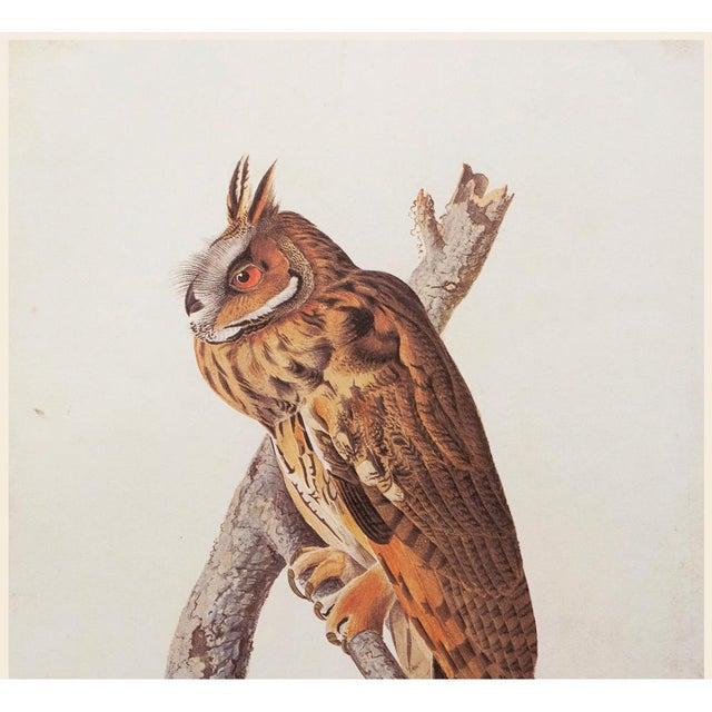 Farmhouse Stunning Long-Eared Owl by John J. Audubon, Vintage Cottage Print For Sale - Image 3 of 10
