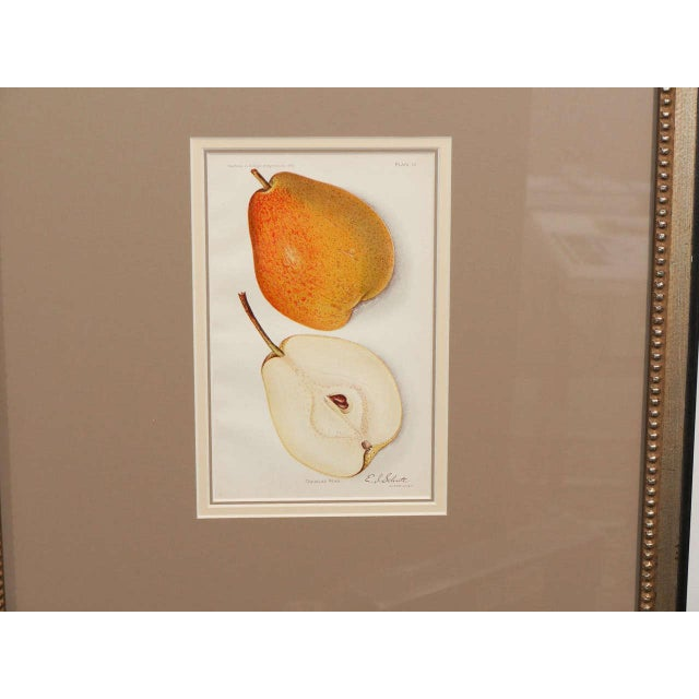 Late 19th Century Architectural Digest Fruit Print For Sale - Image 5 of 8