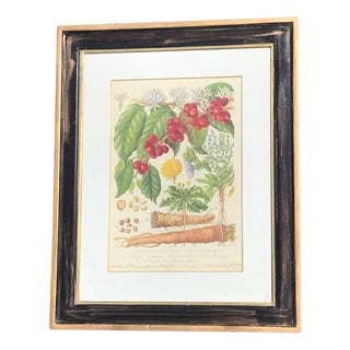 Vintage Trowbridge Botanical Coffee Print Framed Art