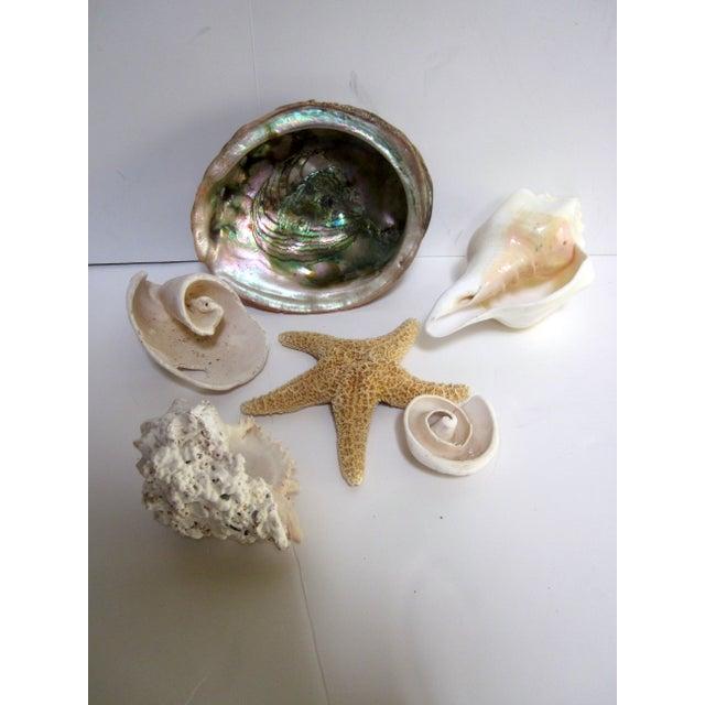 Coastal Collection Sea Shells Shell - Image 3 of 4