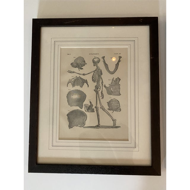 Pair of 1890 Original Anatomy Illustrations of the Skeletal system. Framed in dark wood frame.