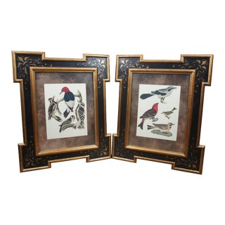 Vintage A. Lawson Bird Family Framed Prints - A Pair For Sale
