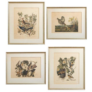 Set of Four Ornithological Prints After John Audubon For Sale