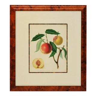 Exquisite 1820 English Fruit Stone Lithograph