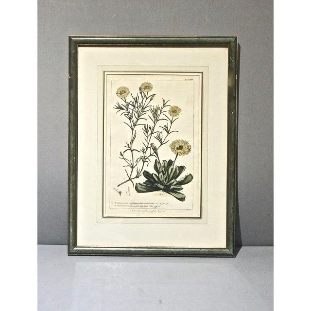 Engraving 18th C. Botanical Engravings - Set of 4 For Sale - Image 7 of 10