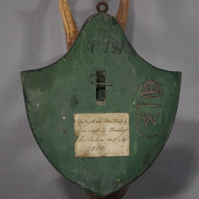 Black Forest Six Large Antique Deer Trophies on Wooden Carved Plaques Ca. 1860 For Sale - Image 3 of 8