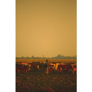 "Contemporary Photography ""King of Cattle"" by Douglas Condzo For Sale"