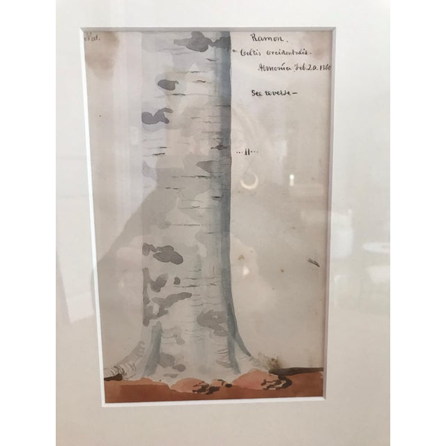 This is a pair of Charles DeWolf Brownell watercolors of tree trunks from the 1859s-1960s they are in great antique...