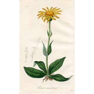 1830s Medical Botanical Print, Leopard's-Bane For Sale