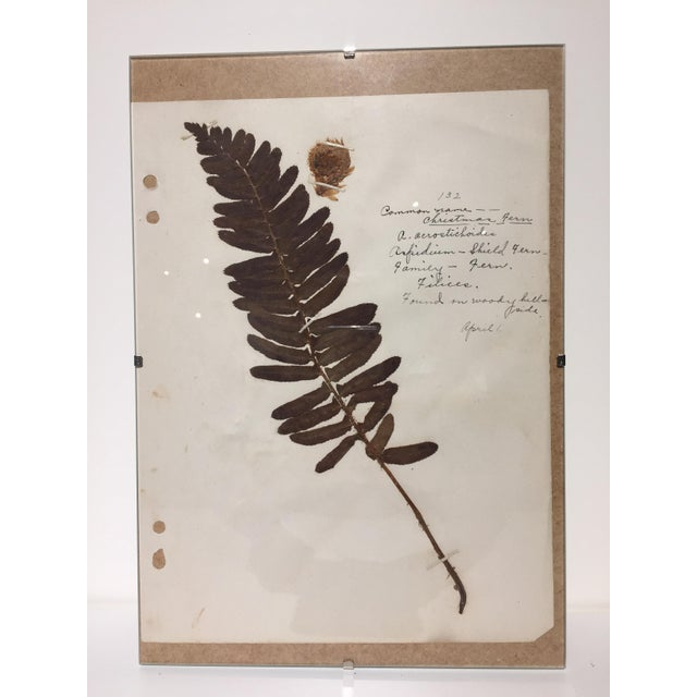Vintage Christmas Fern Botanical Journal Page - Image 3 of 5