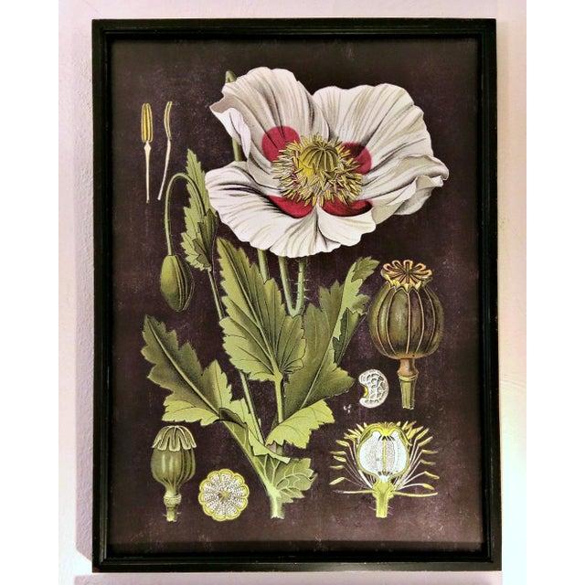 Framed White Flower Botanical Print - Image 2 of 4